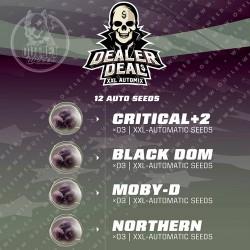 Semillas | Dealer Deal XXL Automix | 12 semillas | Auto | BSF