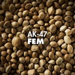 Semillas | AK-47 | Fem | 10 semillas | Granel