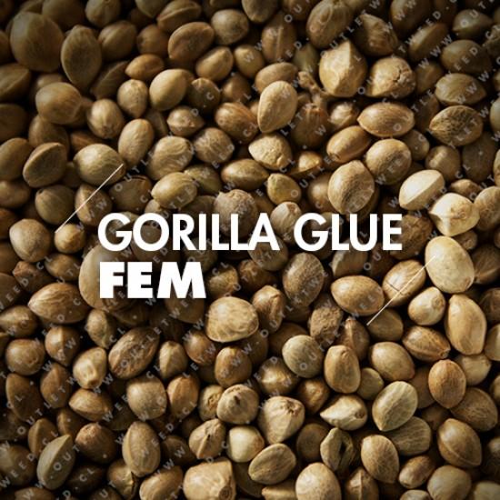 Semillas   Gorilla Glue   Fem   10 semillas   Granel