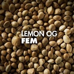 Semillas | Lemon OG | Fem | 10 semillas | Granel