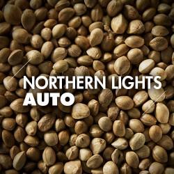 Semillas   Northern Lights   Auto   50 semillas   Granel