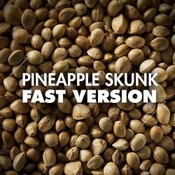 Semillas | Pineapple Skunk | Fast Version | 10 semillas | Granel