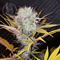 Semillas | Blue Mystic | Fem | 3 semillas | Royal Queen Seeds